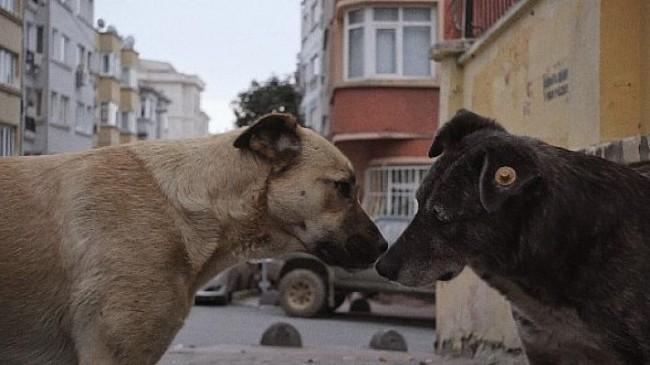 GAİN ve HAYTAP'ın sahipsiz hayvanlara destek kampanyası
