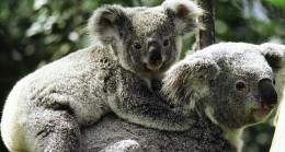 Vahşi Avustralya: Hayatta Kalma Savaşı National Geographic WILD Ekranlarında
